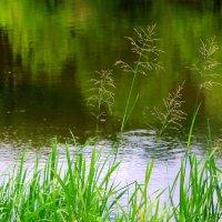 У берега тихо,не шумят камыши... :: Валентина ツ ღ✿ღ