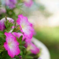 Цветочная нежность.. :: Любовь Леонова