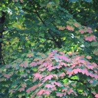 Цветочный хоровод-298. :: Руслан Грицунь