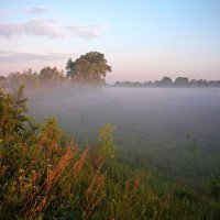 Туманное утро :: Николай Алехин