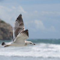 пролетая над рыбьим гнездом :: человечик prikolist