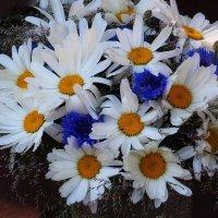 Полевых цветов букетик :: Юрий. Шмаков