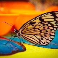 В ярких красках лета :: Elena Ignatova