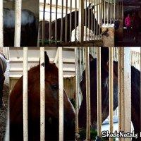 К лошадкам в гости (Луганская конная школа) 2 :: Наталья (ShadeNataly) Мельник