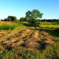 Скошенная трава :: Милла Корн