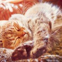 Котик, ты мой котик, тепленький животик... :: cabbage