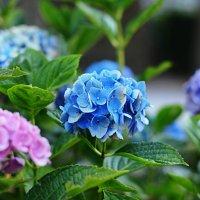 Цветы в саду . :: Natalia Kalyva