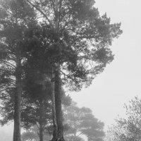 Туман. :: Nikita Side ------