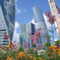 Цветы-city :: Superman 2014