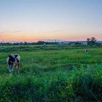 Сельская идиллия... :: Ксения Довгопол