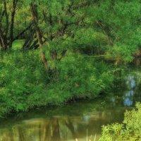 Зеленый уголок природы... :: марк