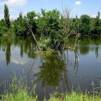 Озеро в ростовском зоопарке :: Нина Бутко