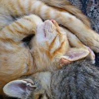 Найди кота :: Galina Belugina