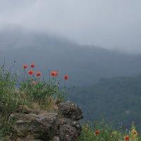 Маки на крепости Фуна :: Валерия заноска