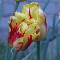 Цветочный хоровод-315. :: Руслан Грицунь