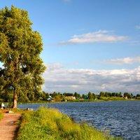 Одинокое дерево :: Алексей Крупенников