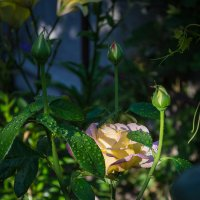 Цветы :: Александр Коваленко