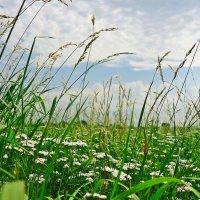 Прекрасней ласки нет, чем страстный шепот лета... :: Galina Dzubina