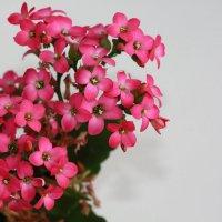 цветочки крохи..... :: Евгения Воробьева