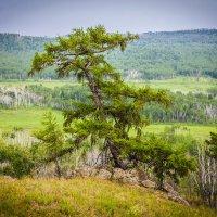 Дерево :: Сергей Сол