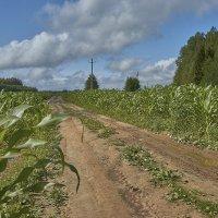Царица полей - кукуруза :: Михаил (Skipper A.M.)