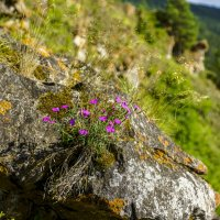 и на скалах ростут цветы.. :: Олег Мартоник