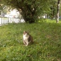 Кошка :: Павел Михалев