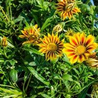 Веселенькие цветочки :: Сергей Щербаков