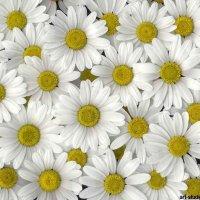Цветочный хоровод-318. :: Руслан Грицунь