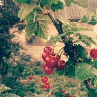 ягода :: kivv man