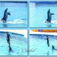 Шоу с дельфинами :: Вадим Куликов