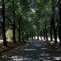 Тенистая алея :: Владимир Бровко