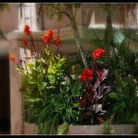 Уличные цветы. :: Leonid Korenfeld