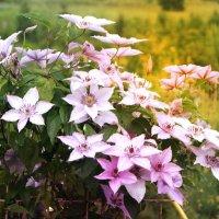 цветы :: Анастасия Токарева
