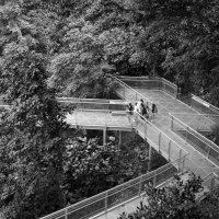 Southern Ridges, Singapore :: Sofia Rakitskaia