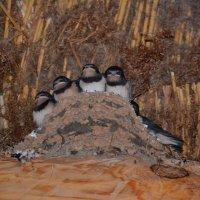 Ласточкино гнездо :: Наталья Левина