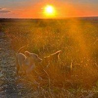 Встреча на рассвете... :: Андрей Зелёный