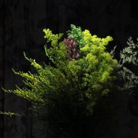 Цветы :: Наташа Шамаева