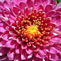 Ботанический сад 19.07.2015 :: Полина