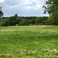 Клеверная поляна :: Alex Sash