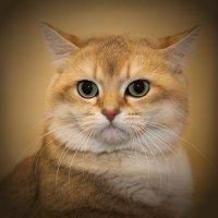 серьёзный кот :: YURIY CH