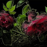 Ах, эти розы... :: Нина Корешкова