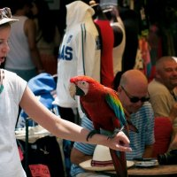попугай и девочка :: olgert6969