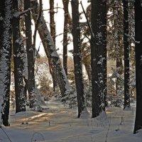 январский лес :: sergej-smv