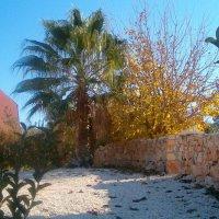 Пальма и шелковица. Осень :: Герович Лилия