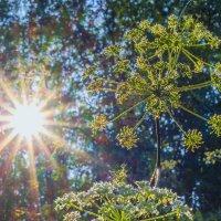 Солнечный свет.. :: Юрий Стародубцев