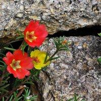 Цветок и камень. :: Татьяна и Александр Акатов