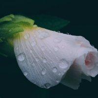 kiss the rain :: Ольга Бездольная