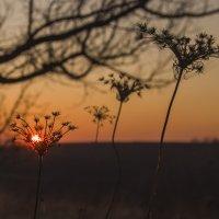 запуталось Солнце :: аннушка