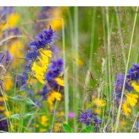 Цветы :: Вера Ульянова